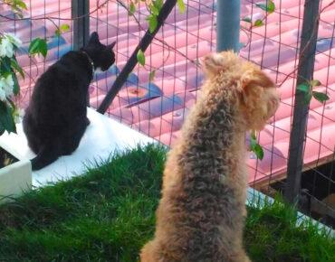 terrazzo gatti cane animali