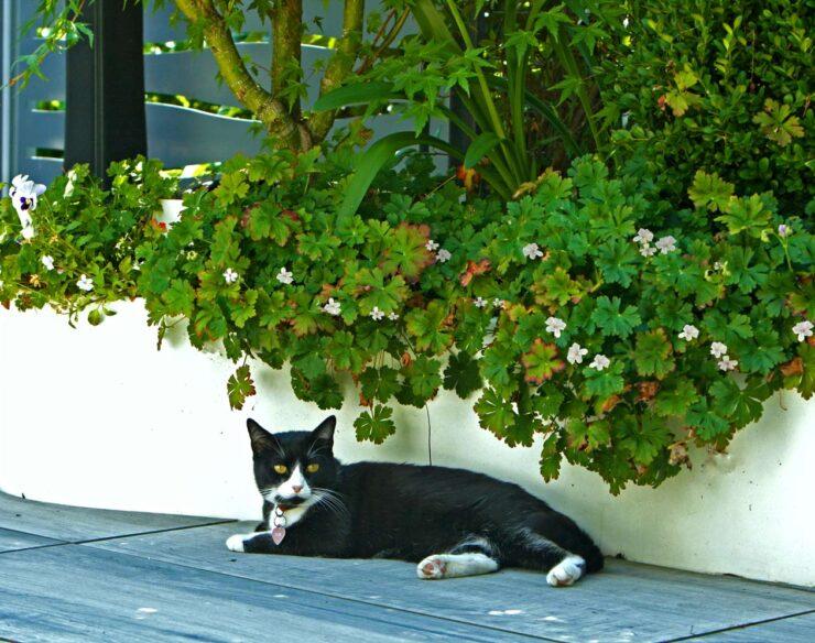 terrazzo per gatti