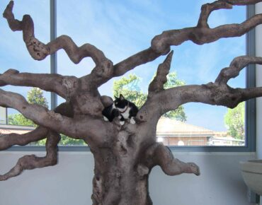 albero per gatti