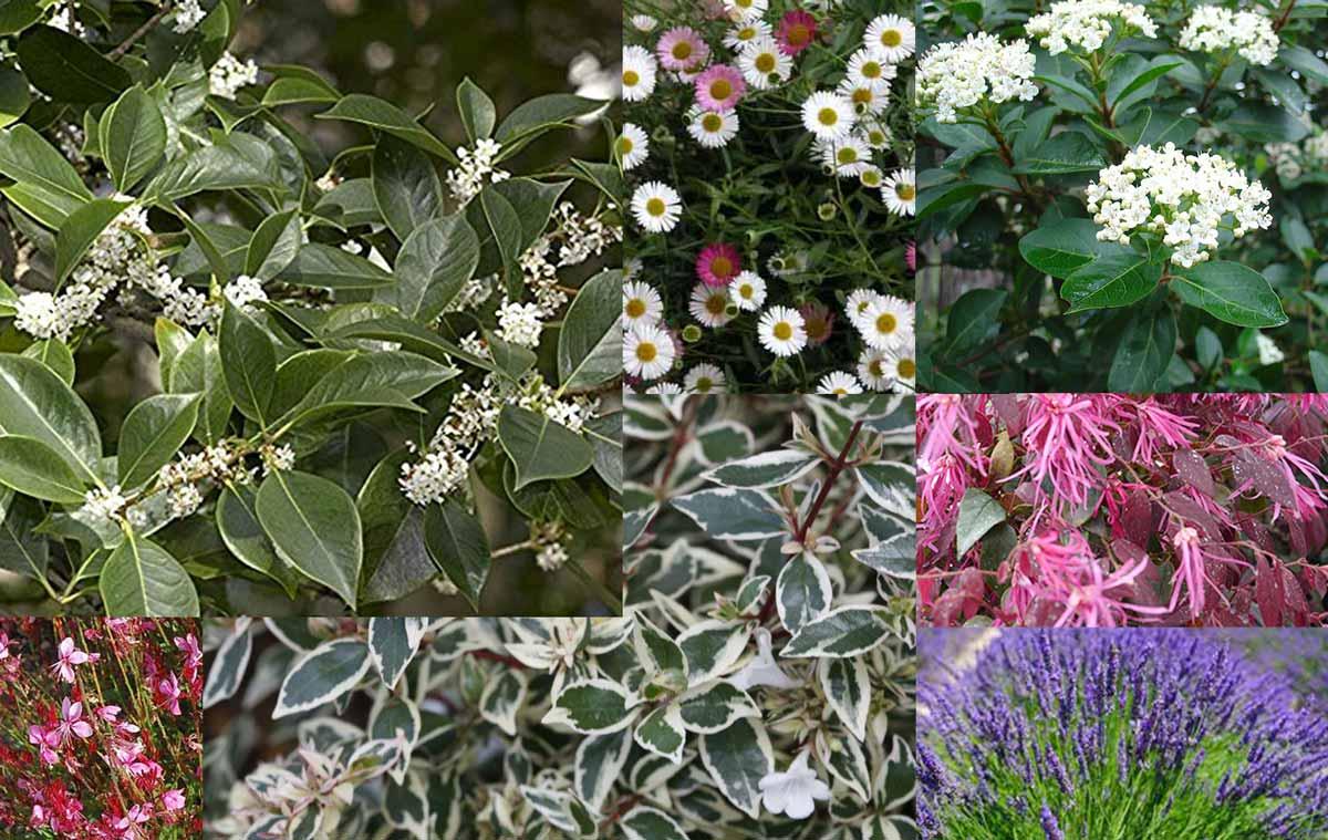Siepi Miste Da Giardino 8 piante facili e molto decorative per il giardino - verde